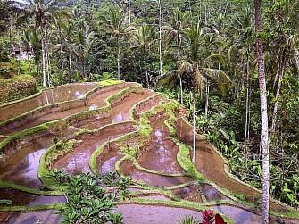 意外と知られていない!?バリ島の世界遺産