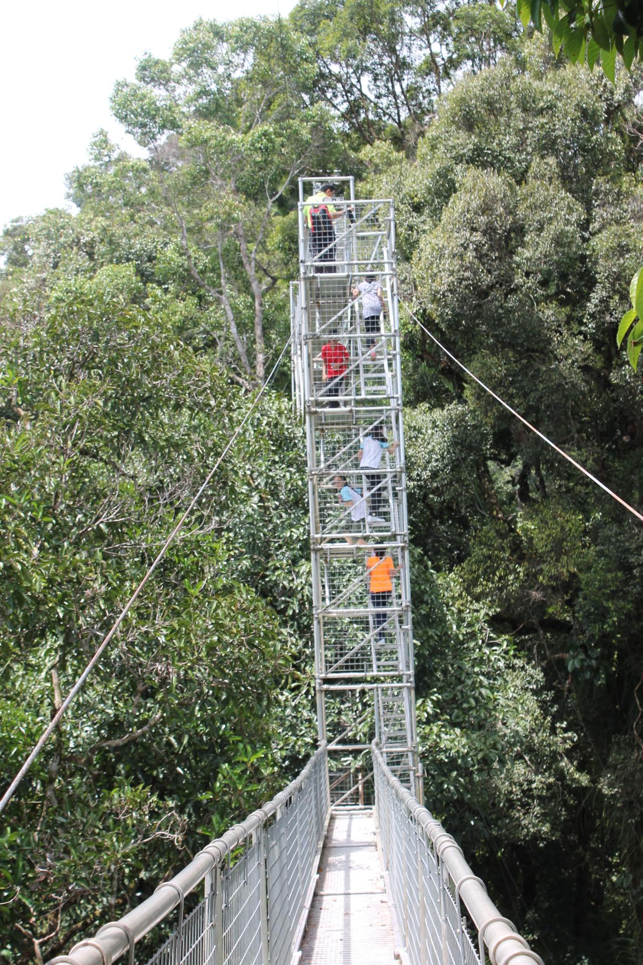 鉄塔の先には・・熱帯雨林を望む...