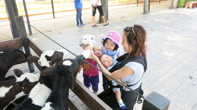 子連れのおでかけにおススメ!チョクチャイ牧場で動物と触れ合う