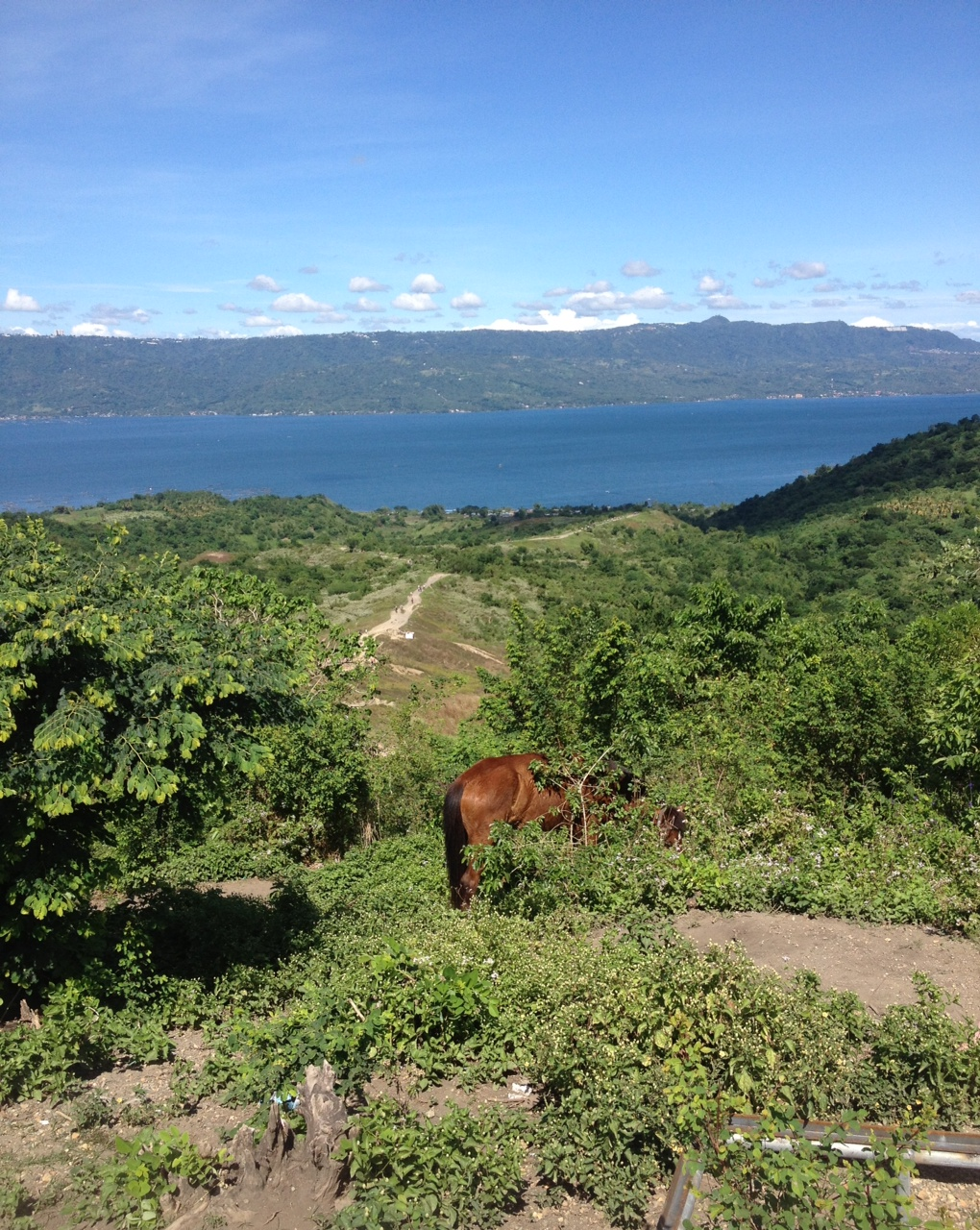 タール火山 馬