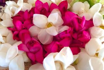 満月の日ポヤデーに、白い服を着てお寺にGO!