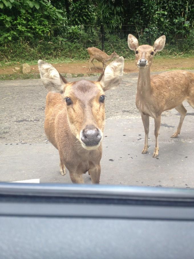 動物と間近に触れ合える動物園「タマンサファリ」