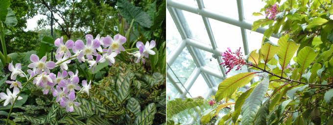 botanicgarden3
