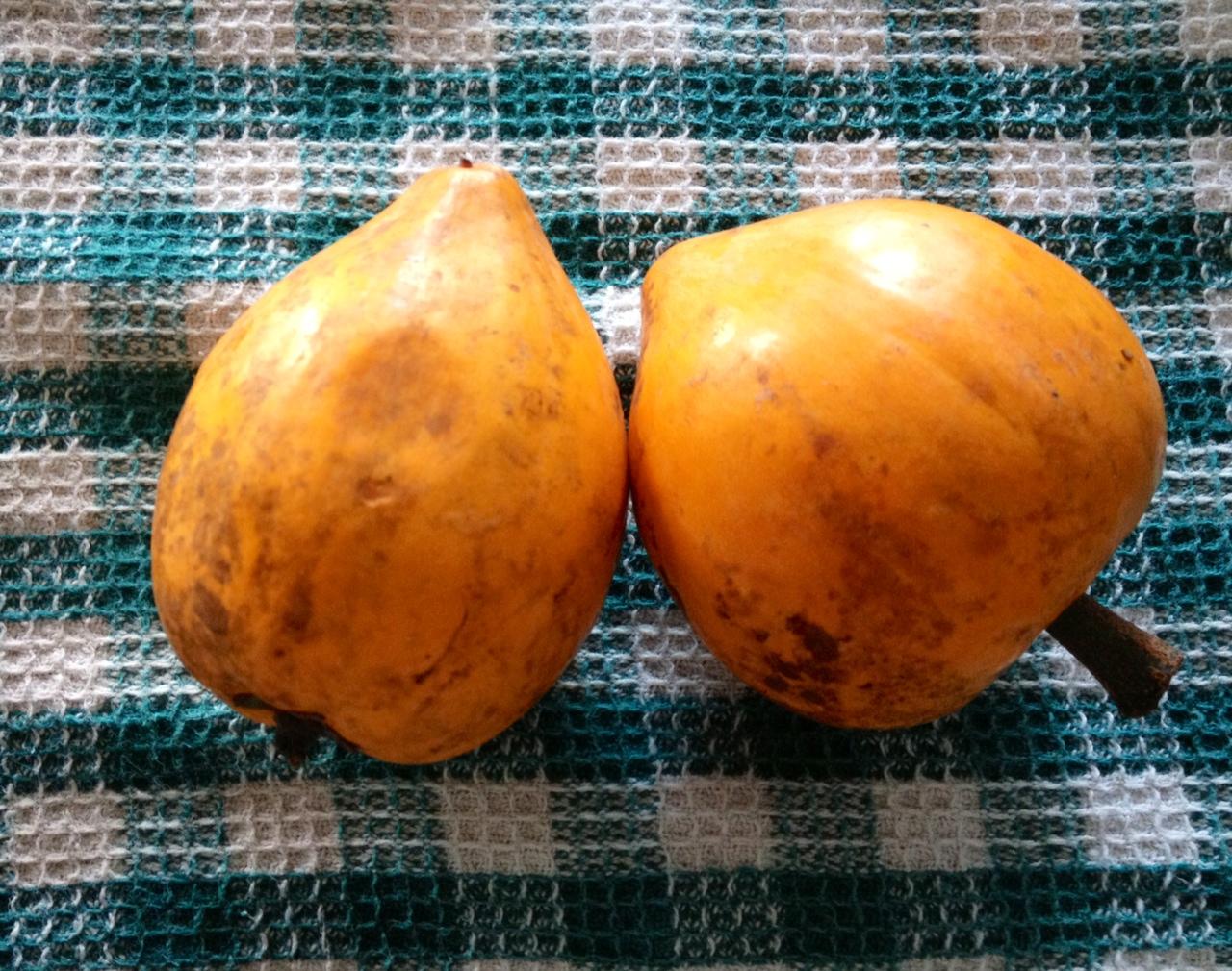 まるでスイートポテトみたいな果物「エッグフルーツ」