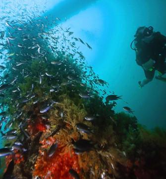 ゲストハウスも併設した、ブルネイで人気のダイビングショップ「OCEANIC QUEST」