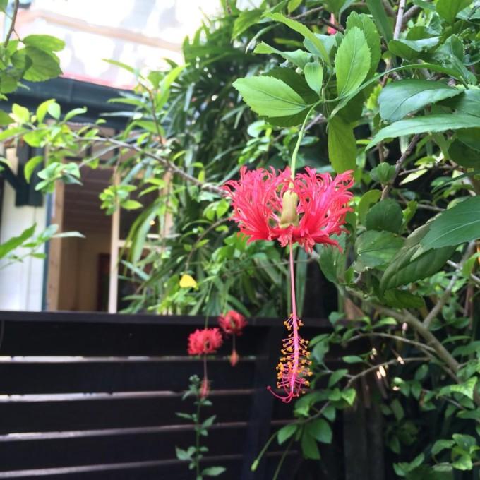 花と文化の博物館_06