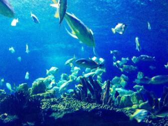 クアラルンプールの水族館「aquaria(アクアリア)」へ!