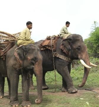 ミャンマーで象と触れ合おう「ポーチャー・エレファント・キャンプ」