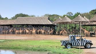 キリンの大群世界最多!?バンコクのサファリワールド