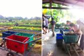 farm and