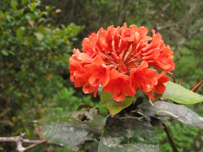 Kinabalu_02