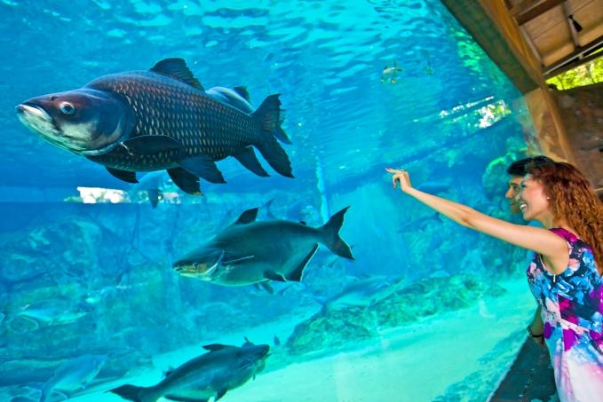 淡水生物とパンダが主役!シンガポール「River Safari(リバーサファリ)」