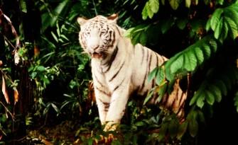 檻のないオープン・コンセプトの「シンガポール動物園」
