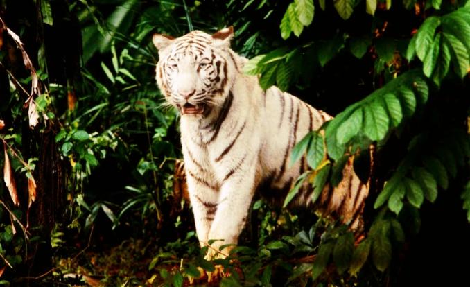 Zoo_HR_06_Fotor