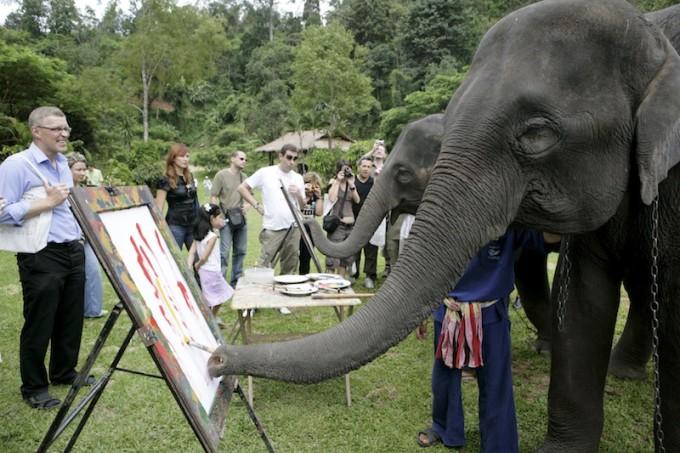 Maesa Elephant Camp  Chiang Mai *** Local Caption *** ปางช้างแม่สา  จังหวัดเชียงใหม่