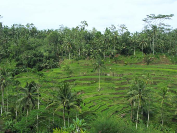 Bali_01_