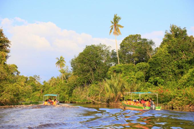 熱帯雨林1_