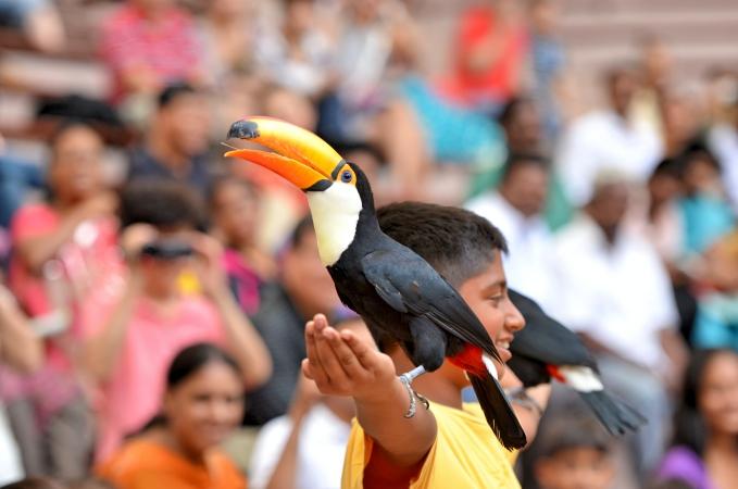 Jurong Bird Park_HR_02_credit Derrick See_Fotor