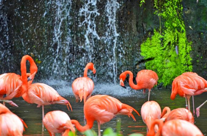 Jurong Bird Park_HR_04_credit Derrick See_Fotor