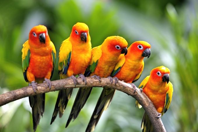Jurong Bird Park_HR_05_Fotor