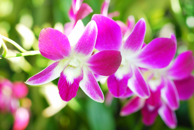 Orchid_HR_02_