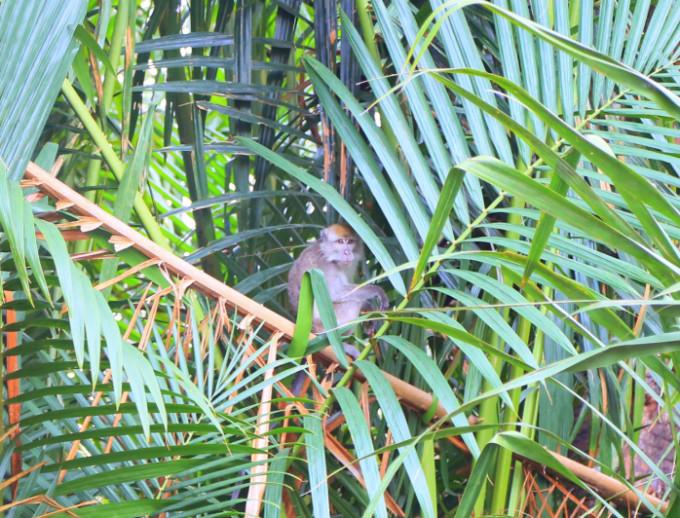熱帯雨林2_