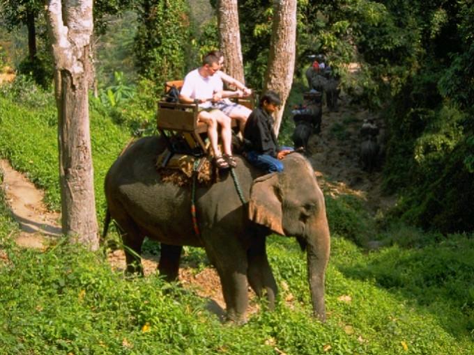チェンマイのエレファント・キャンプでゾウと触れ合う