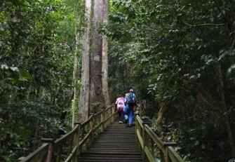 ブルネイの大自然を満喫しよう!ウル・テンブロン国立公園へ