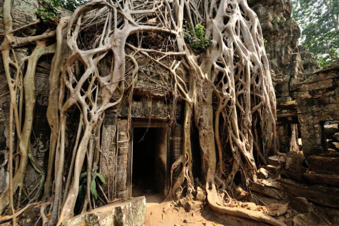 巨大樹木に覆われたアンコール遺跡群の寺院遺跡「タ・プローム」