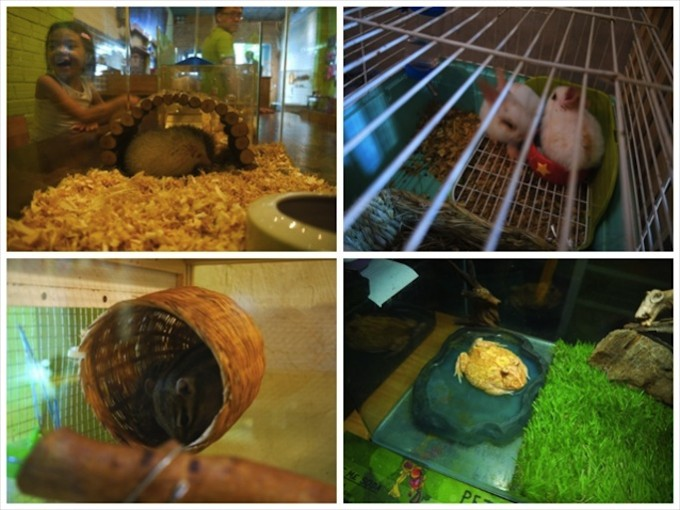 other_pets