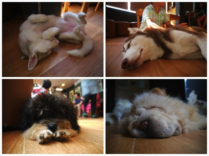 sleeping_dogs2