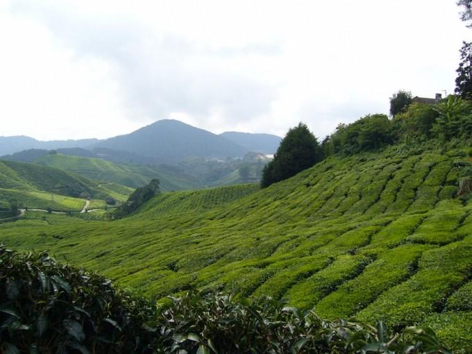 マレーシア最大級の高原リゾート「キャメロンハイランド」