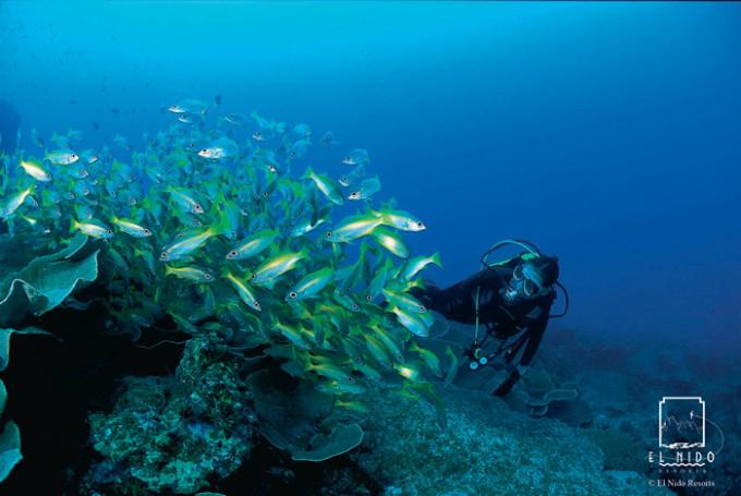 水中 South mini w diver
