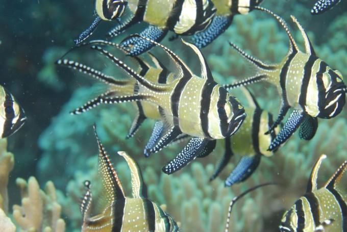 海底でフィッシュウォッチング!インドネシア・レンベでダイビング