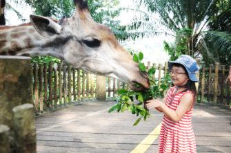 熱帯ジャングルのアニマルパラダイス!シンガポールは動物園が楽しい