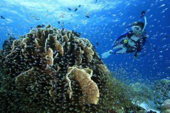 2度目のバリ島ダイビングなら、ムンジャンガン島へ!
