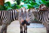 2015_Singapore Zoo_Hi-Res_03 (Afur Wong)