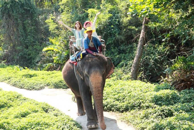 象乗り体験イメージ2