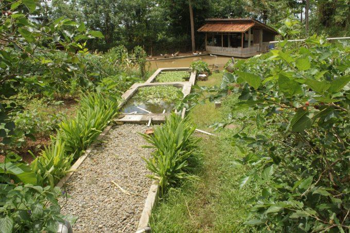 ジョグジャカルタ郊外のオーガニック農園と絶景レストラン