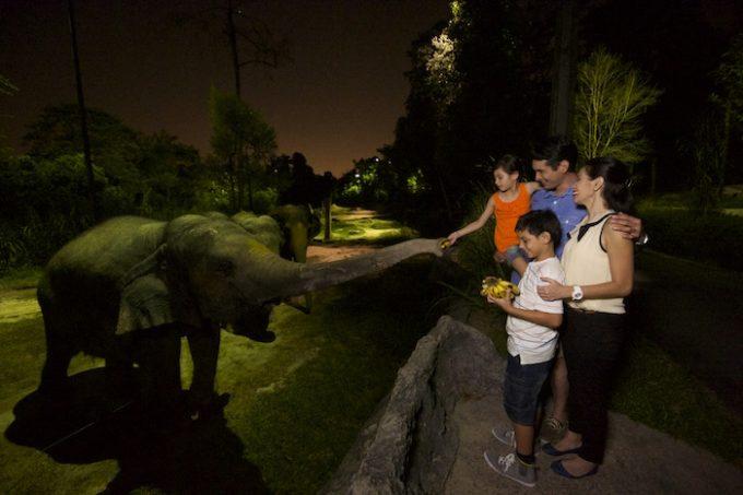 Night Safari1