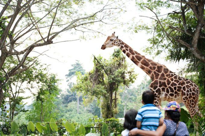 シンガポール家族旅行で外せない!熱帯ジャングルの動物園巡り