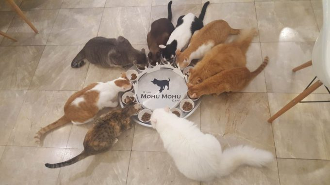 たくさんの猫がお出迎え!バンコク猫カフェ「Mofu Mofu cafe」