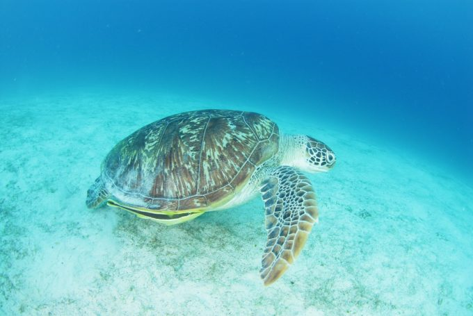 人気急上昇のフィリピン、今ダイビングに行くべきは、カラミアン諸島!