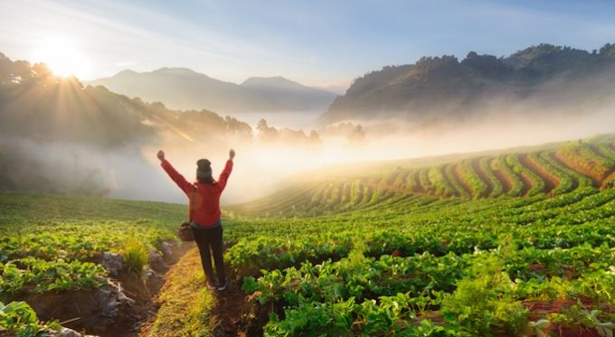 CHIANG MAI, THAILAND-December 11 : Asian woman traveller standing  on the peak of strawberry field with hands raised admiring breathtaking view at sunrise on December 11, 2014 at Doi Ang Khang , Chiang Mai, Thailand.