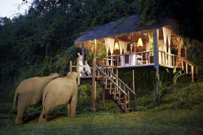 これからオンシーズンのタイの山リゾート、しかも象さんが一緒!