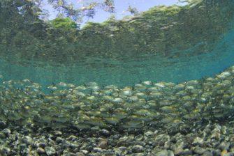 バリ島の実力派ビーチダイブスポット、トランバン