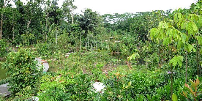 シンガポール植物園に新エリア「Learning Forest」オープン