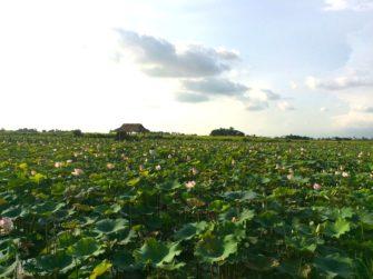 穴場!トンレサップ湖周辺でカンボジアの空気感に浸れるコース