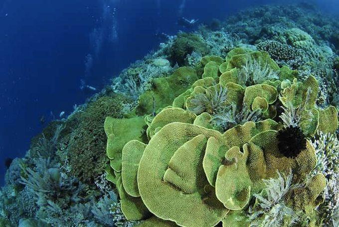 数千メートルの深海から湧昇流が豊かな海を育むメナド